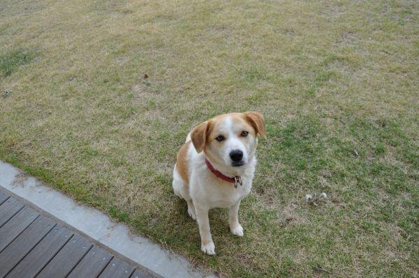 施設で飼っているペット犬(名前はピース)